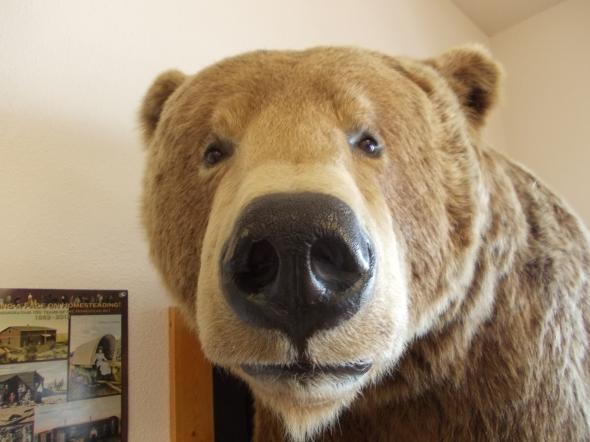 Y si bien fuimos advertidos por toda la gente local acerca del peligro de los osos este fue el unico avistamiento cercano en un centro de informacion turistica.